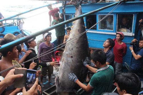 Ngư dân đưa con cá ngừ vây xanh lên cảng Hòn Rớ