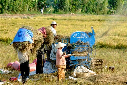 Ngành nông nghiệp ĐBSCL thu hút vốn FDI rất khiêm tốn Ảnh: NGỌC TRINH