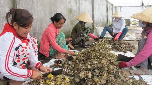 Công nhân băm nhỏ cuống dứa trước khi chế biến thành thức ăn chăn nuôi xuất khẩu tại Công ty TNHH Kim Nghĩa (TP.HCM)