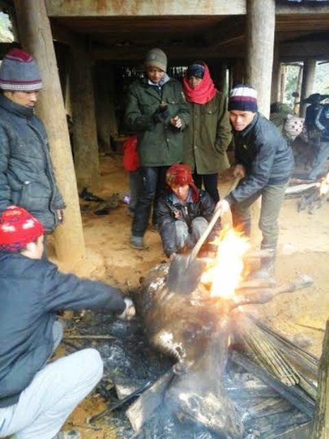 Trâu, bò chết ở Cao Sơn (xã Lũng Cao, huyện Bá Thước, tỉnhThanh Hóa), được người dân thịt làm thức ăn - Ảnh: Thanh Tùng