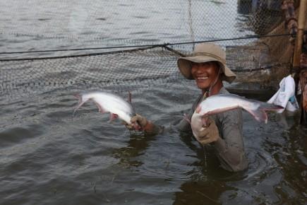 Bộ NNPTNT khuyến nghị: Các doanh nghiệp xuất khẩu cá tra phải kiểm soát được nguồn cá nuôi, kiểm soát an toàn thực phẩm và chất lượng sản phẩm.