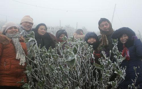 Xuất hiện băng giá tại Mẫu Sơn thu hút khách du lịch trong và ngoài tỉnh. ảnh Đăng Thuỳ