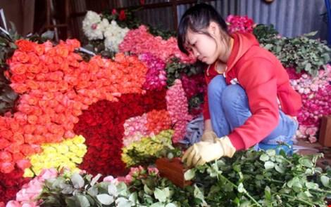 Dù chưa tới lễ nhưng hoa hồng đã tăng giá gấp 4-5 lần so với ngày thường