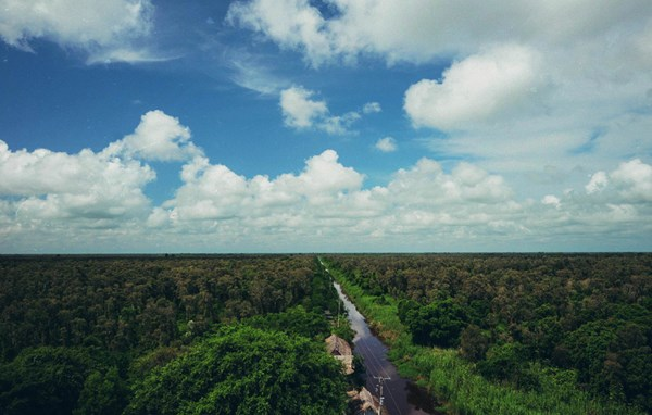 Mênh mang khắp bốn bề là những rừng tràm trải dài ngút tầm mắt tới tận chân trời