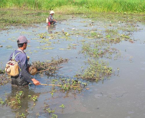 Dùng xung điện đánh bắt cá sẽ tận diệt nguồn thủy sản vốn đang cạn kiệt ở ĐBSCL Ảnh: THỐT NỐT