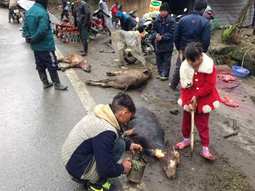 Người dân Lào Cai xẻ thịt trâu chết rét bán cho du khách Ảnh: Nguyễn Phan