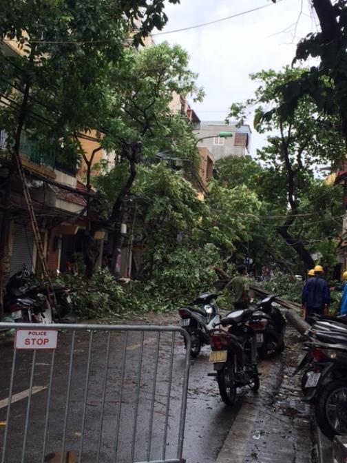 Thay vào đó, hoạt động hối hả nhất trên nhiều phố cổ Hà Nội hôm nay là cảnh thu gom cây đổ, gãy. Công ty cây xanh đang phối hợp với công an phường khoanh vùng khu vực nguy hiểm để dọn cây đổ giữa phố Lãn Ông