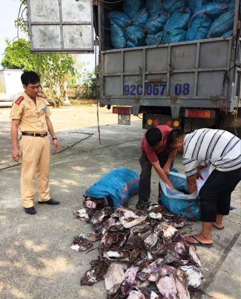 Hơn 21 tấn mực khô không rõ nguồn gốc được lực lượng CSGT Thanh Hóa phát hiện, bắt giữ