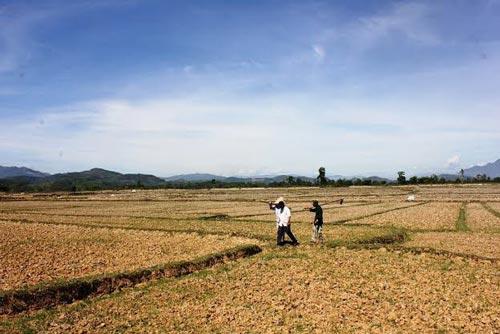 Hàng chục hecta đất sản xuất ở cánh đồng Tân Phước bỏ hoang dù đã xây tuyến kênh Bà Chanh với kinh phí 600 triệu đồng