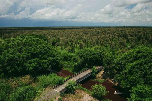 Một cây cầu bắc ngang con kênh chạy quanh vườn quốc gia U Minh Hạ. Tôi có thắc mắc về màu đỏ của nước thì người lái thuyền giải thích nguyên nhân do lá tràm rụng xuống, lâu dần biến màu nước thành ngầu đỏ như bây giờ
