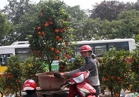 Cái bặm môi của người thanh niên này nói lên nhiều điều. Cây cam này được ươm trồng ở Hoài Đức, Hà Nội, mang về Hội chợ Xuân Nam Từ Liêm để bán. Bình thường, giá cây cam này khoảng 1,3 triệu. Tuy nhiên, từ khi mang khoảng hơn 100 cây cam lên đây, anh chỉ bán được khoảng 15 cây. Hôm nay, giá cây cam này chỉ còn 600.000 đồng.
