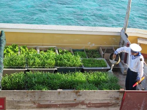 Vườn rau thanh niên trên đảo Đá Lớn được chăm sóc kỹ càng nên luôn xanh tốt