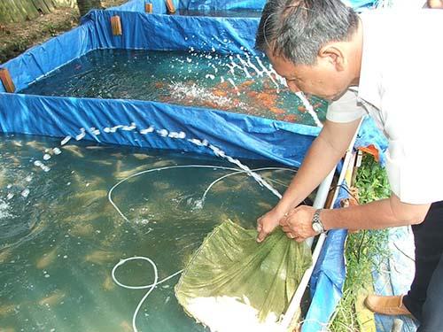 Ngành cá cảnh cần được nhà nước hỗ trợ tạo điều kiện để phát triển