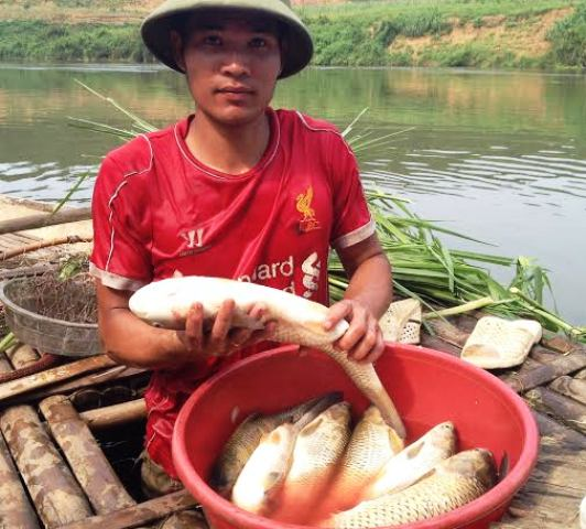 Cá lồng bè của một hộ dân ở xã Thành Mỹ, huyện Thạch Thành, tỉnh Thanh Hóa chết trắng lồng sau khi nguồn nước ô nhiễm đi qua