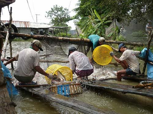 Nuôi trồng thủy sản cần có quy hoạch cả về số lượng và chất lượng