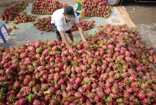 Thanh Long xuất khẩu vào thị trường Nhật