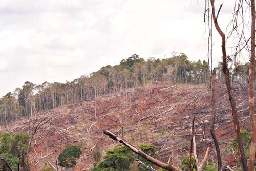 Rừng Tây Nguyên suy giảm diện tích và chất lượng do tình trạng khai thác gỗ trái phép Ảnh: CAO NGUYÊN