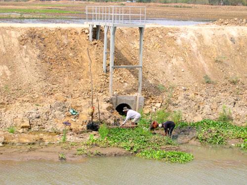 Nông dân lấy nước ngọt để sản xuất lúa ở tỉnh Sóc TrăngẢnh: Ngọc Trinh