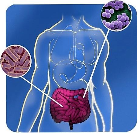 Biến đổi vi khuẩn ở ruột có thể giúp ngăn ngừa béo phì và tác hại có liên quan. Ảnh EUFIC