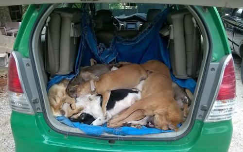 16 con chó bị nhóm cẩu tặc bắn hạ