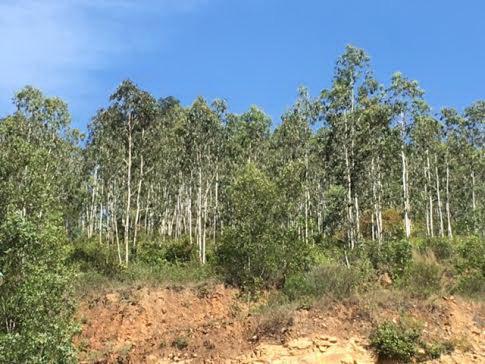 Khu đất bị cựu quan chức xã Mỹ Thành lấn chiếm trồng rừng
