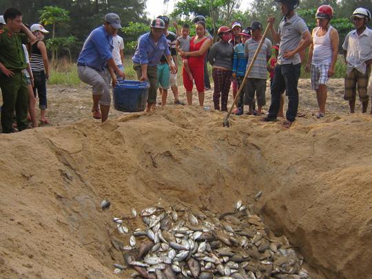 Tiêu hủy cá chết ngày 3-5 ở Thừa Thiên - Huế. Ảnh: Quang Tám