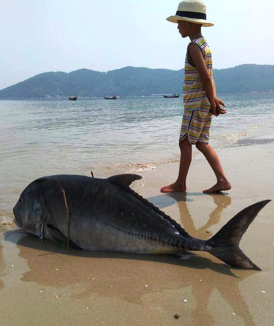 Một con cá vẩu 35 kg dạt vào bờ biển xã Lộc Vĩnh (Thừa Thiên - Huế) vài ngày trước - Ảnh: Quang Nhật
