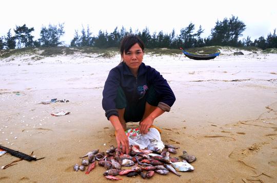 Chỉ trong thời gian ngắn, người phụ nữ này nhặt được rất nhiều cá trôi dạt trên bãi biển Quảng Trị - Ảnh: Q.Nhật