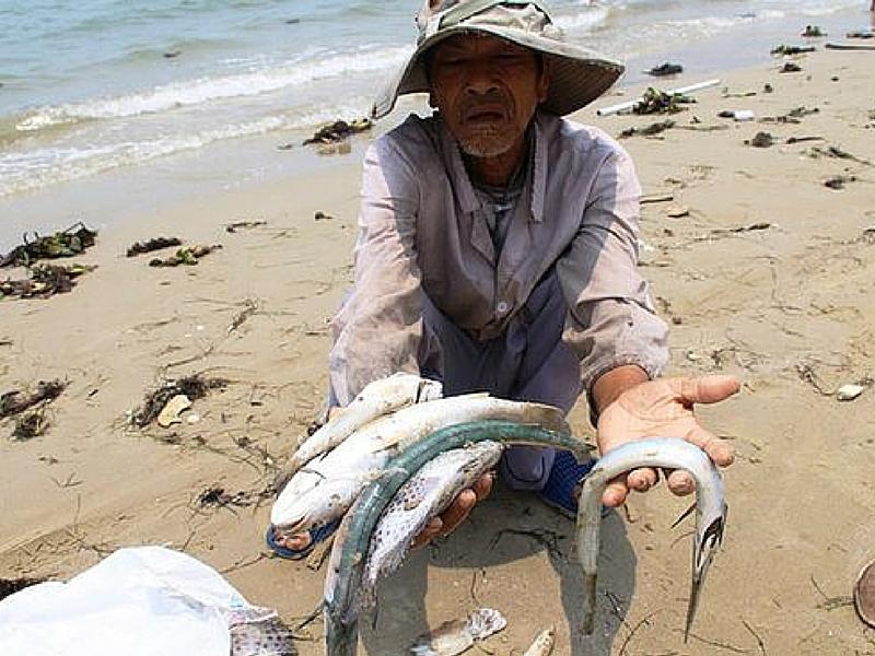 Cá chết hàng loạt bất thường ở miền Trung đã làm cuộc sống của người dân lao đao