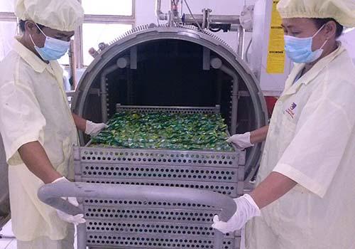 Chế biến trứng cút tiệt trùng tại Nhà máy Vietfarm