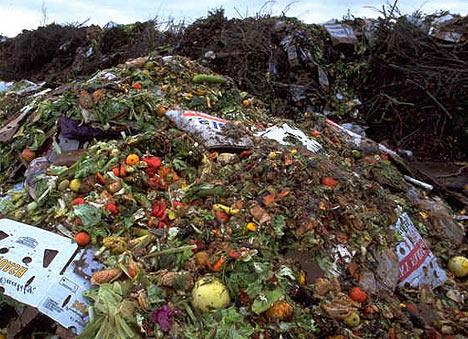 Khoảng 1/3 thực phẩm trên thế giới bị lãng phí mỗi năm Ảnh: Daily Mail