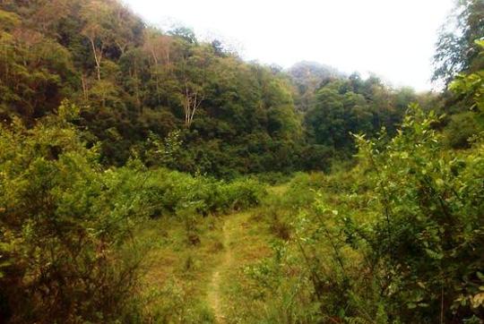 Đường vào bản Kịt phải đi bộ nhiều km đường rừng nên công tác cứu hộ gặp nhiều khó khăn