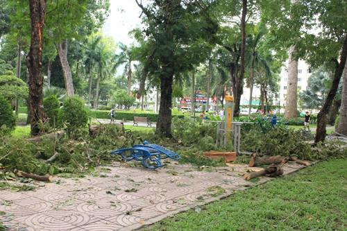 Hiện trường sự cố cành cây gãy khiến một người phải nhập viện