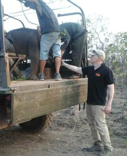 Mặc dù có sự tham gia của chuyên gia nước ngoài nhưng mẹ chú voi vẫn không chịu nhận