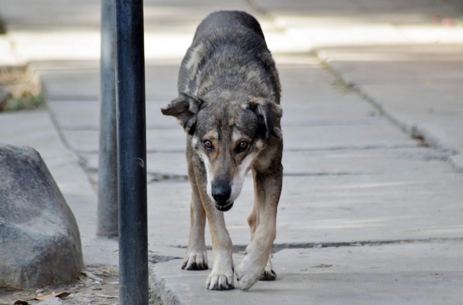 Chú chó này tái hiện hình ảnh của Hachiko sau khi chờ đợi người chủ quá cố suốt 5 năm. Ảnh: EPA