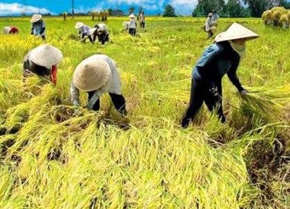Người nông dân rất cần sự hỗ trợ từ các cơ quan ban, ngành để canh tác có lãi