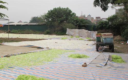 Nguyên liệu làm mứt Tết phơi lộ thiên trên những tấm bạt bẩn, cạnh nhà vệ sinh bốc mùi tại Hà Nội Ảnh: NGỌC DUNG