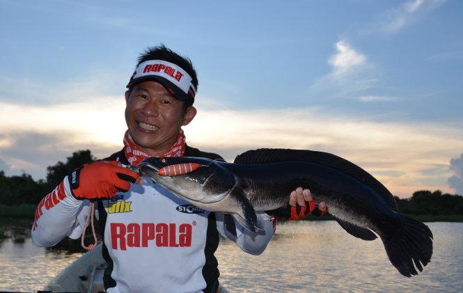 Một con cá lóc bông Láng Sen được một hãng sản xuất cần câu của Singapore chụp để quảng cáo cho sản phẩm - Ảnh: Khu bảo tồn Láng Sen cung cấp