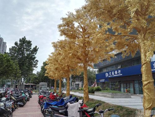Từng chiếc lá được phủ kín trong vàng khiến con phố dường như sáng rực hơn thường lệ.