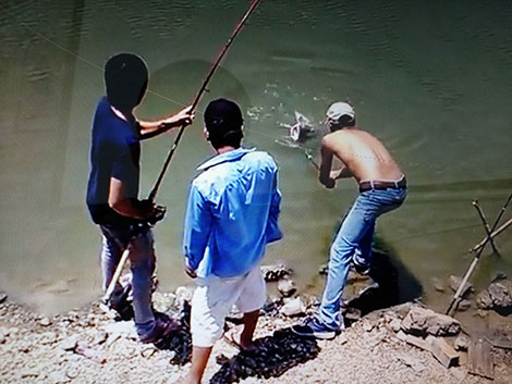 Các cần thủ câu được cá lăng khổng lồ.