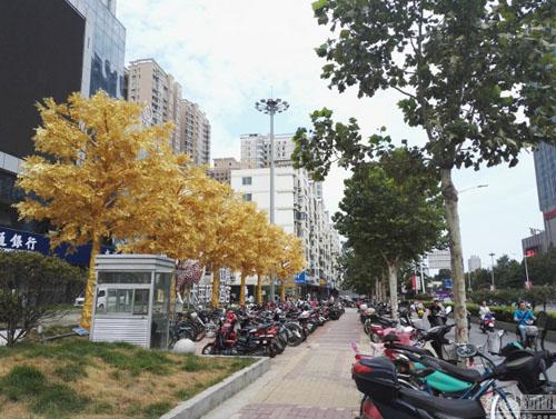 Hàng cây dát vàng trên phố ở Trung Quốc