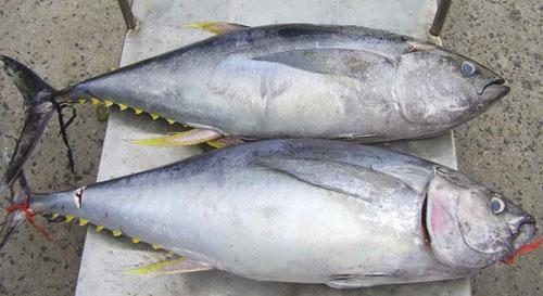 15 món ăn hải sản ngon nổi tiếng không nên bỏ qua