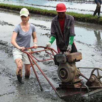 Sinh viên xuống ruộng cùng nông dân