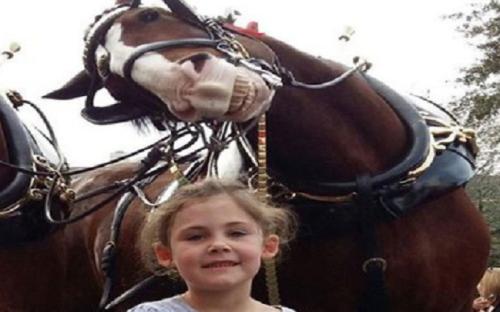 Một bé gái chụp ảnh tự sướng với ngựa. Ảnh: Facebook