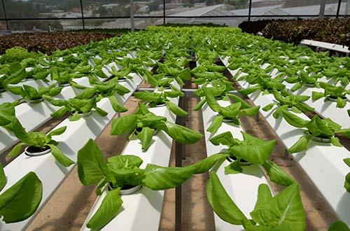 Veeteq Farm đưa nông sản sạch ra thị trường