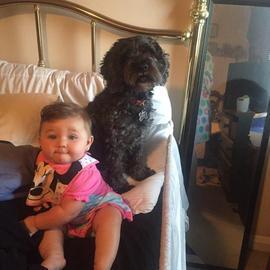 Polo luôn quấn quít bên cạnh 2 mẹ con Poremski. Ảnh: CBS News
