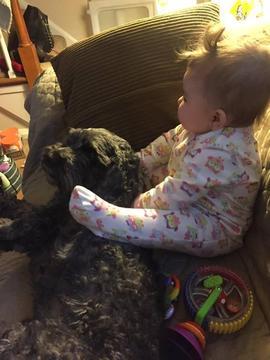 Mất đi chú chó Polo dũng cảm, có lẽ vết thương trong lòng người mẹ trẻ này cần nhiều thời gian để chữa lành.