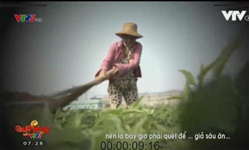 Hình ảnh trong phóng sự cây chổi quét rau dàn dựng sai sự thật trên VTV3