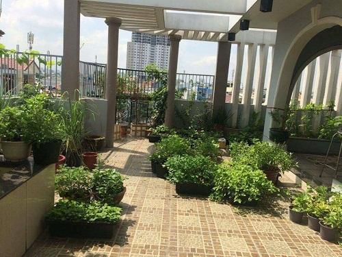 Toàn cảnh khu vườn trên sân thượng của gia đình chị Huyền