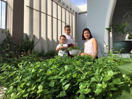 Ban đầu, chị Thanh Huyền trồng thử nghiệm vài loại rau sạch cho 2 cậu con trai nhỏ